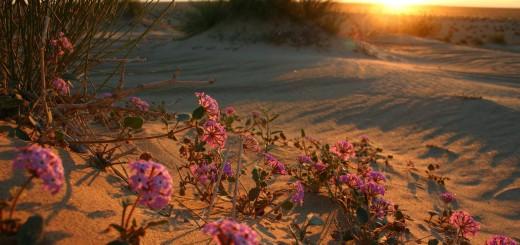 """""""Si rallegrino il deserto e la terra arida, esulti e fiorisca la steppa. Come fiore di narciso fiorisca; sì, canti con gioia e con giubilo."""" (Is 35,1-2)"""